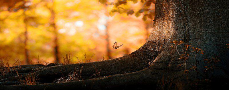 Manzara & Doğa Kapak Fotoğrafları