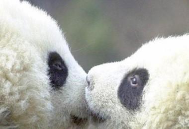 Sevimli Hayvanlar-Facebook Kapak Fotoğrafları